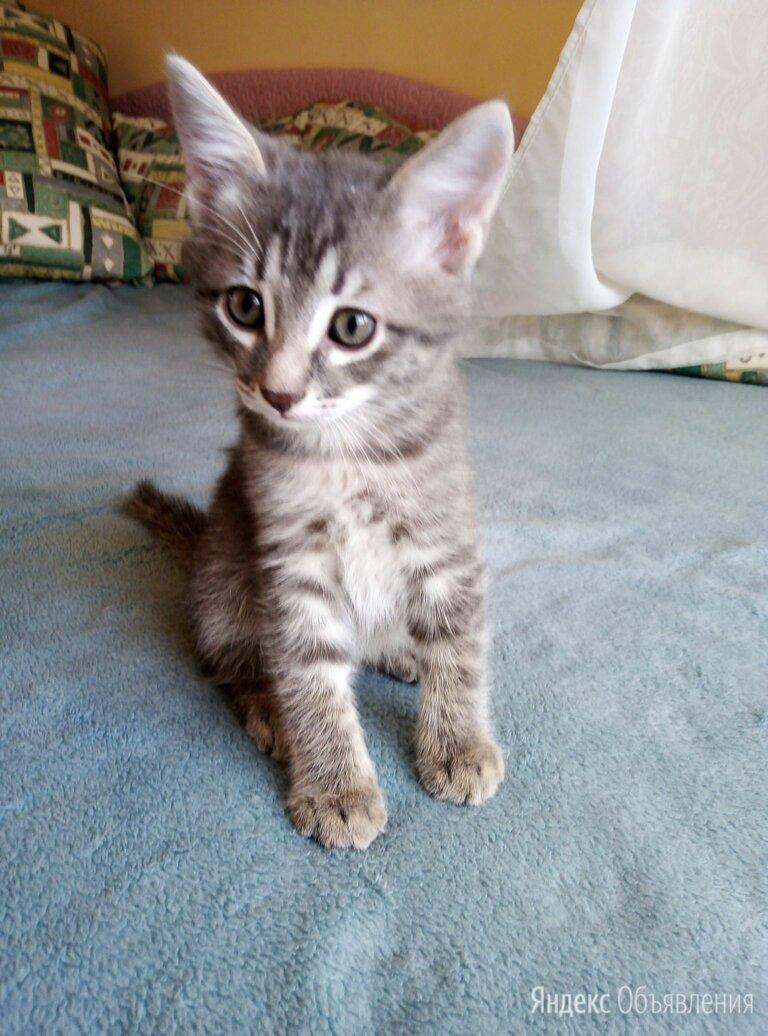 Летние котята ищут дом по цене даром - Кошки, фото 0