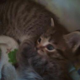Кошки - Красивые котята, 0