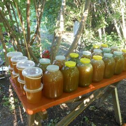 Продукты - Цветочный мёд , 0