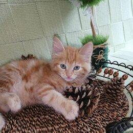 Кошки - Рыжие кошечки в добрые руки, 0