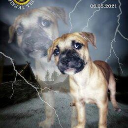 Собаки - Щенки Питбуля , 0