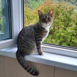 Кошки - Шотландская кошечка, 0