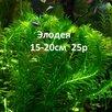 Аквариумные растения. по цене 25₽ - Растения для аквариумов и террариумов, фото 1