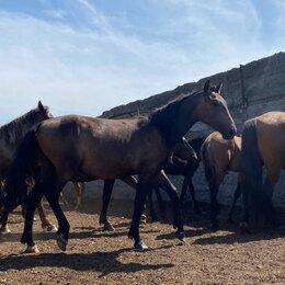 Лошади - Жеребчик, 0