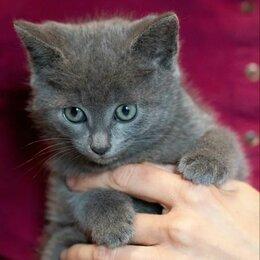 Кошки - Кроха Гвен, подкидыш от домашней кошки, ищет маму-папу, 0