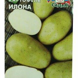 Лук-севок, семенной картофель, чеснок - Картофель Илона (Седек), 0
