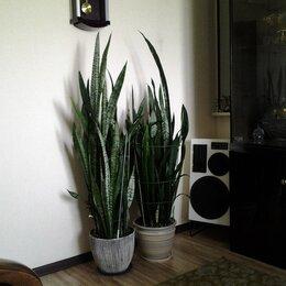 Комнатные растения - личные вещи и товары для дома, 0