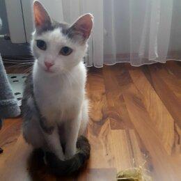 Кошки - Кошка даром, 0