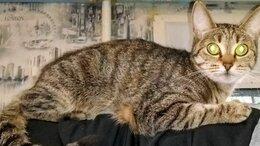 Животные - Пропала кошка, зовут Бусинка (Буся), 0