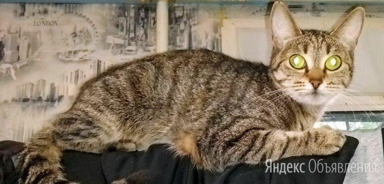Пропала кошка, зовут Бусинка (Буся) по цене не указана - Животные, фото 0