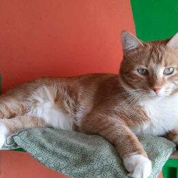 Кошки - Кот Арбуз ищет дом и добрые руки, 0