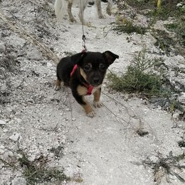 Услуги для животных - Выгул/передержка собак мелких и средних пород, 0