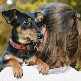 Собаки - Миниатюрная собачка (5 кг) в добрые руки (метис таксы), 0