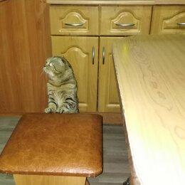 Кошки -  Шотландский кот. Фолд. , 0