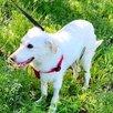 Собаке ищет дом и друга по цене 1₽ - Собаки, фото 2