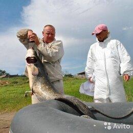 Экскурсии и туристические услуги - Рыбалка в Астраханской области, 0