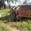 Щенки Лайки  Вельск Архангельской области по цене 6000₽ - Собаки, фото 1