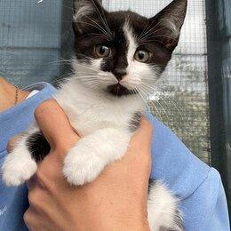 Кошки - Маленький котёнок мальчик Максим 2,5 мес ищет мампап, 0