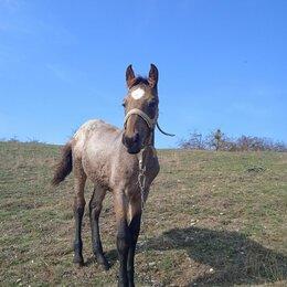 Лошади - Продам кобылку, 0