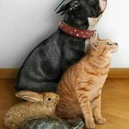 Услуги для животных - Передержка домашних животных, 0