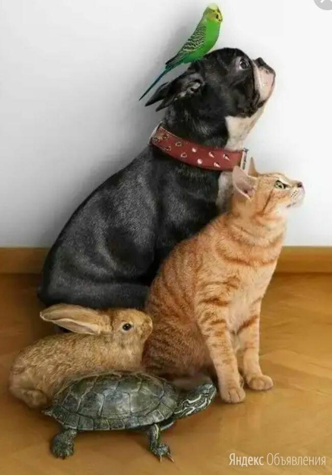 Передержка домашних животных по цене не указана - Услуги для животных, фото 0