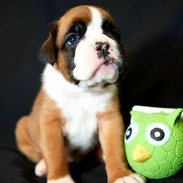 Собаки - Щенки боксёра, 0