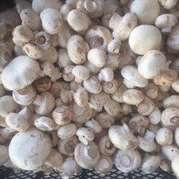 Сборщики - Сборщица грибов, 0