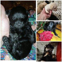 Собаки - Щенки в добрые руки. (Мама ростом небольшая). Роделись 23.06.21., 0