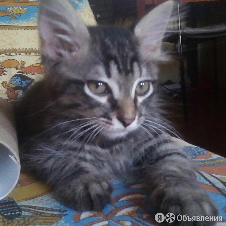 котёнок в любящую семью по цене даром - Кошки, фото 0