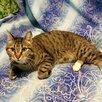 Молодой котик бесплатно по цене даром - Кошки, фото 2