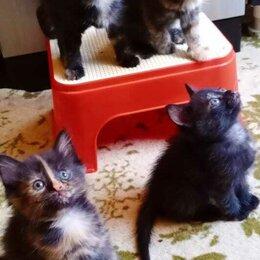 Кошки - Отдам в добрые ручки, 0