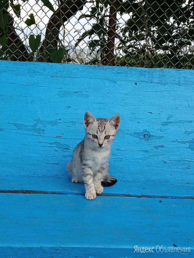 Животное по цене даром - Кошки, фото 0