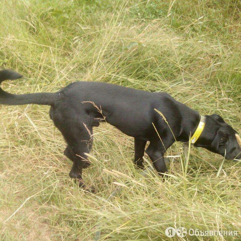Продажа собаки по цене 3000₽ - Собаки, фото 0