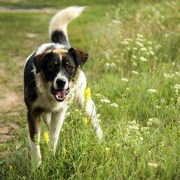 Собаки - Домашние животные, 0