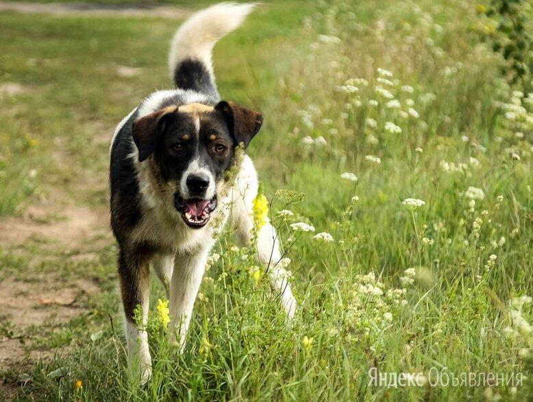 Домашние животные по цене даром - Собаки, фото 0