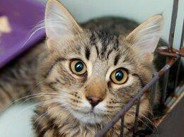 Кошки - Котёнок-скромняжка Лумара, 0