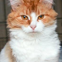 Кошки - Пушистая и ласковая кошечка Хенчи, 0