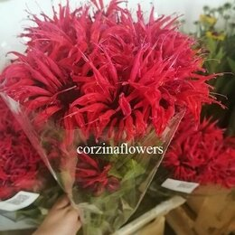 Цветы, букеты, композиции - Монарда малиновая срезка, 0