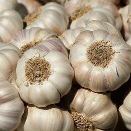 Лук-севок, семенной картофель, чеснок - чеснок, 0