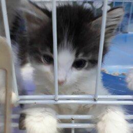 Кошки - Ласковый котенок-мальчик, 0