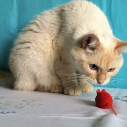 Кошки - Умница Барсик ждёт Вас, 0