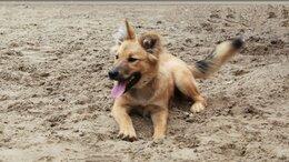 Собаки - Меня зовут Молли и я ищу дом, 0