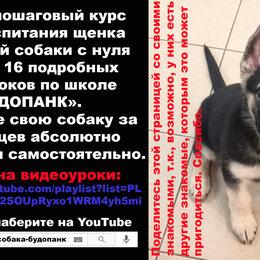 Собаки - собака служебная, 0