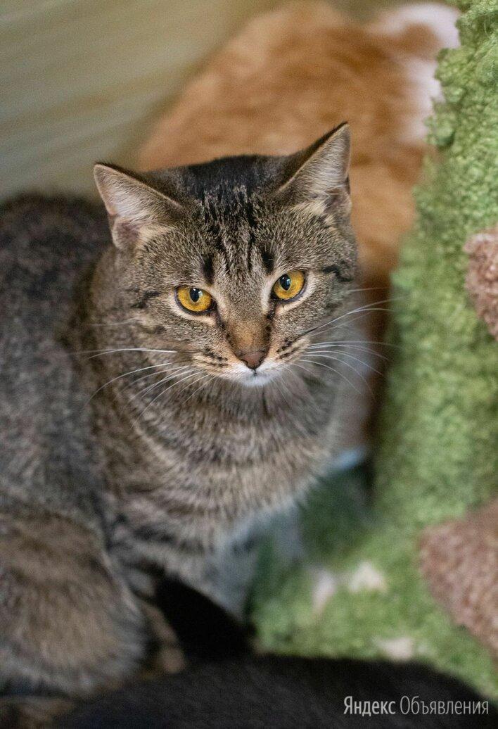Обаятельная Зося мечтает любящей семье по цене даром - Кошки, фото 0
