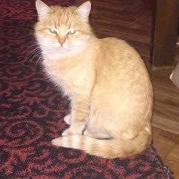 Животные - Пропала рыжая кошка после стерилизации, 0