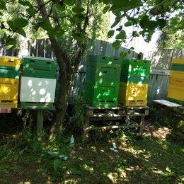 Сельскохозяйственные животные и птицы - Пчелосемья, 0