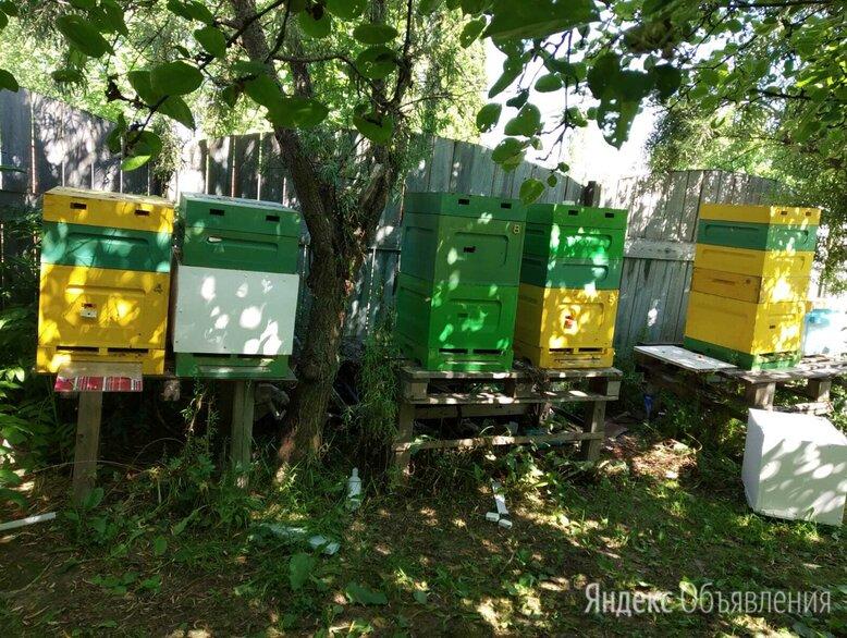 Пчелосемья по цене 1000₽ - Сельскохозяйственные животные и птицы, фото 0
