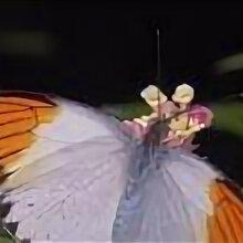 Другие - Живые бабочек Hebomoia glaucippe, 0
