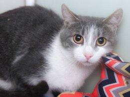 Кошки - Кошка Орели, которую спасли с улицы вместе с…, 0
