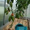 Семена по цене 3₽ - Семена, фото 5
